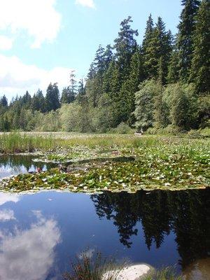 Beaver Lake, Stanley Park