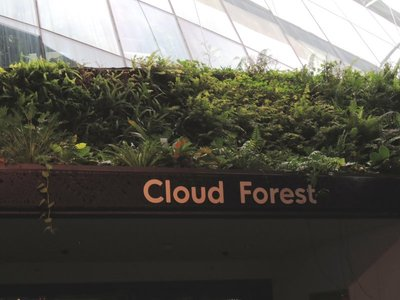 之後是cloud forest