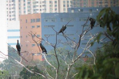 Bird in HK