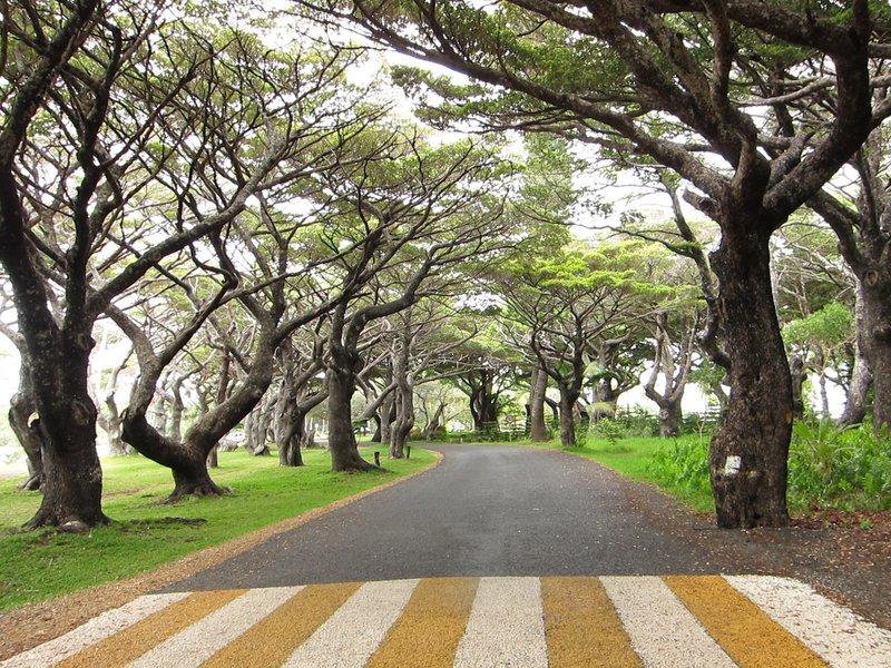 Walking from Kanumera Bay to Kuto Bay