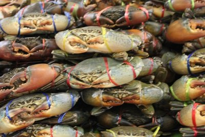 Fresh crabs for sale!