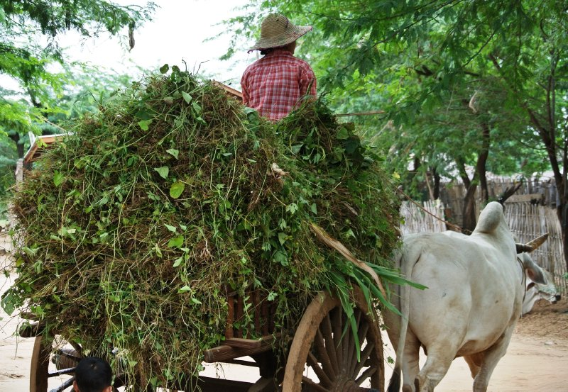 large_ox_cart.jpg