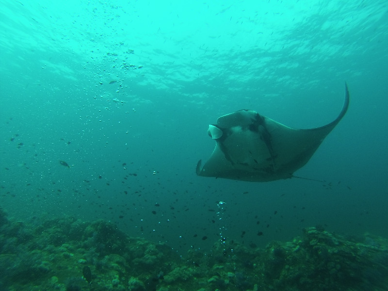 Encounter with a Manta Ray... impressive!