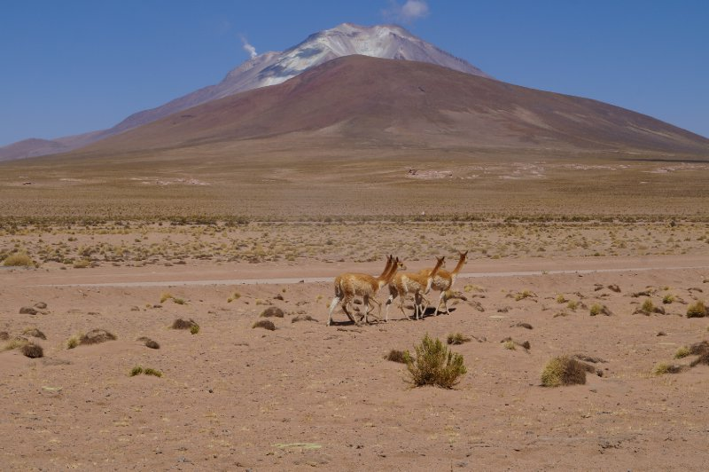 Leaving the desert, we would arrive in the National Park Eduardo Avaroa