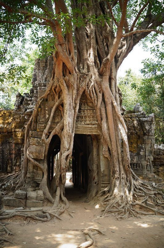 The third eastern gopura, with strangler fig, still in Ta Som