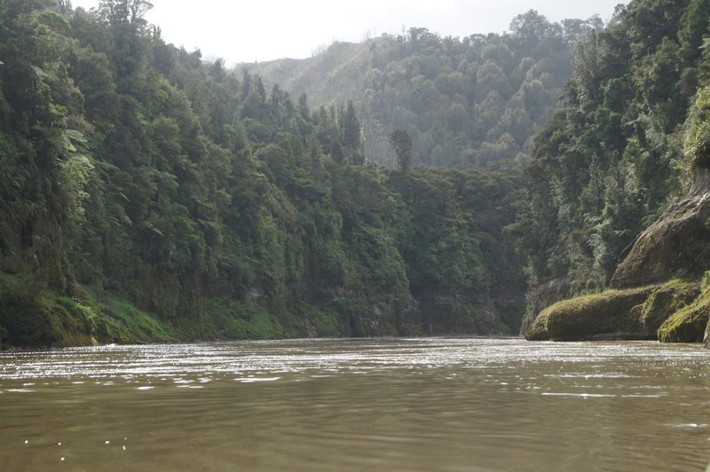 large_Whanganui_River_trip__48_.jpg