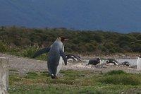Penguins (28)