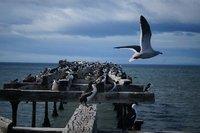 Punta Arenas (14)