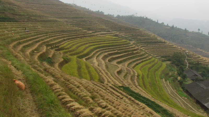 Dazhai rice terraces