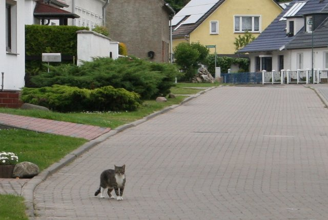 large_Lenkija-Vo..094-002.jpg
