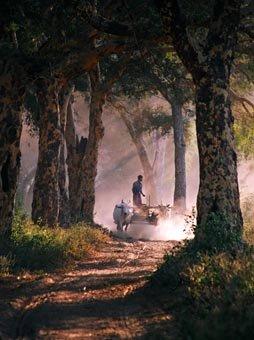 Mandalay Trip