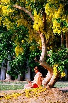 Meditation at Mandalay