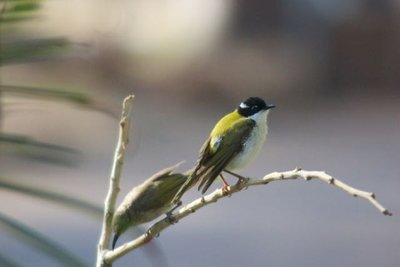 Lots of bird life at Wyndham caravan park