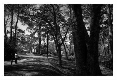 Earlwood Park