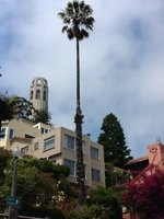 SF_coit_tower.jpg