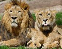 Tanzania Safari, Kilimanjaro and Zanzibar Holiday, tours and transfers