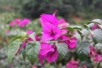 Common wildflower in China