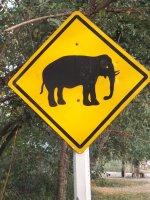 Elaphants may cross- Thailand