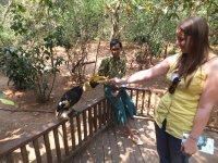 Chelsea feeding a Great Hornbill