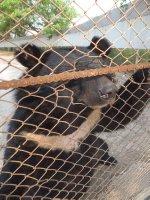 Black bear - Safari Volunteer