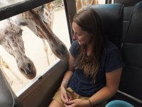 giraffe - Safari Volunteer