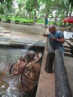 Graham feeding a Hippo at Chiang Mai Zoo
