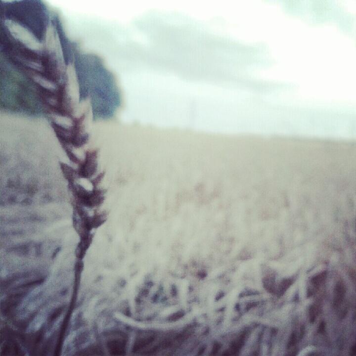 love the fields