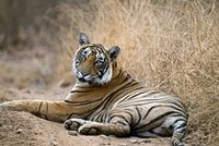 India Wildlife Tour Packages,India Adventure Cultural Tour Packages