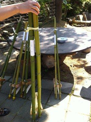 Bamboo Stilts for Sale, Nishino Farmer's Market