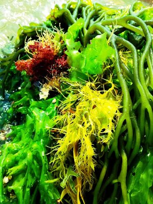 Sea Salad?
