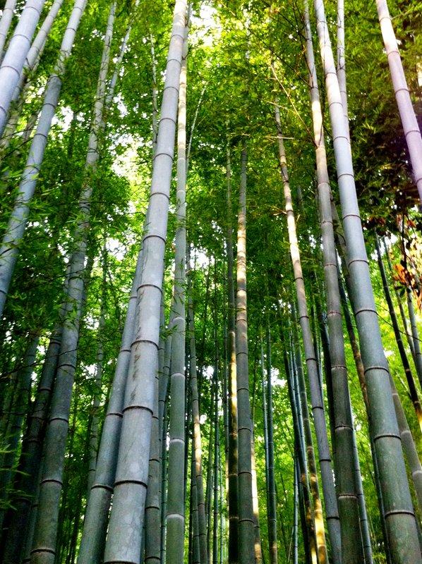 large_July_2012_.._Bamboo_052.jpg