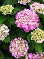 June_2012_Shikoku_220.jpg