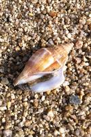 May_2013_Beach_Babies_006.png