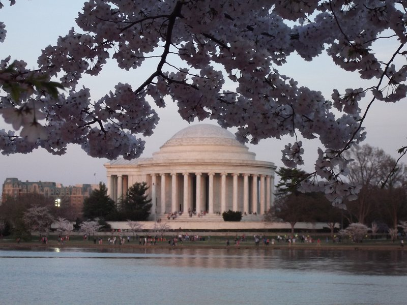 Jefferson Monument at Cherry Blossom time