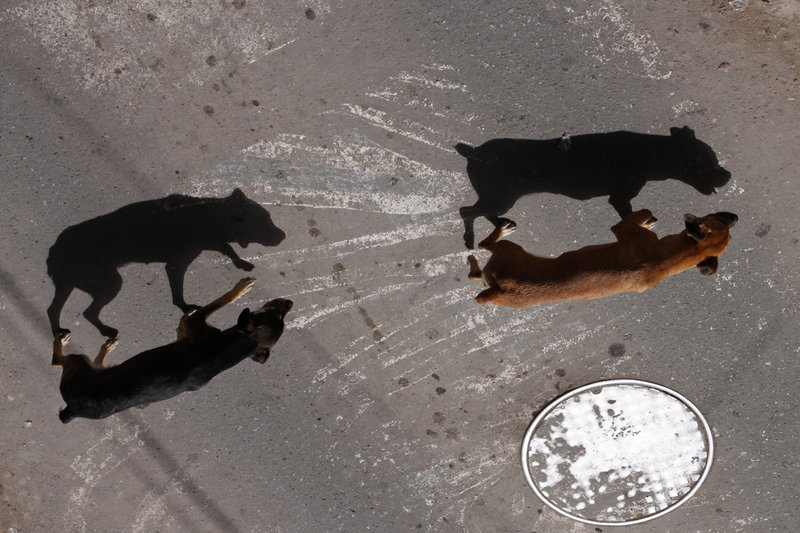 The Dogs and their Shadows