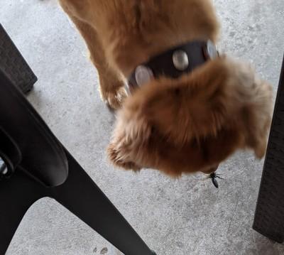 Buddy Finds a Bug