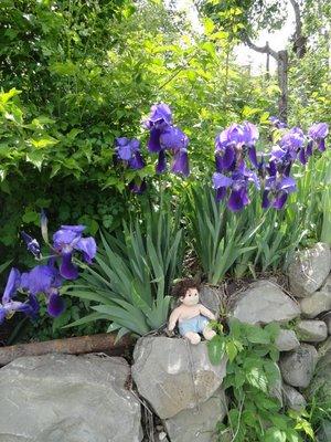 Bazil Ty Jr Enjoys the Flowers in Lahic 5-23-2013 1-32-18 AM