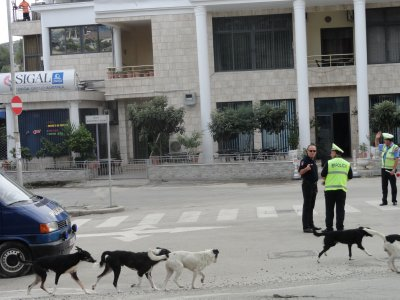 Dogs, goats, and cops wait for the prime minister