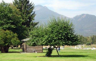 Oldest Apple Tree in Montana