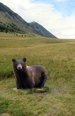 The Only Bear I Saw