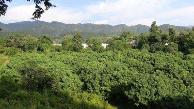 Bhogpur