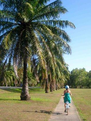 palm trees port douglas