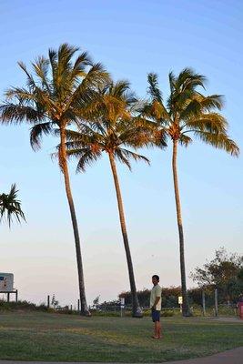 Lukin under Palm Trees