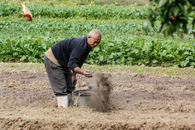 Next to fish farming, vegetable growing appears to be the economic mainstay