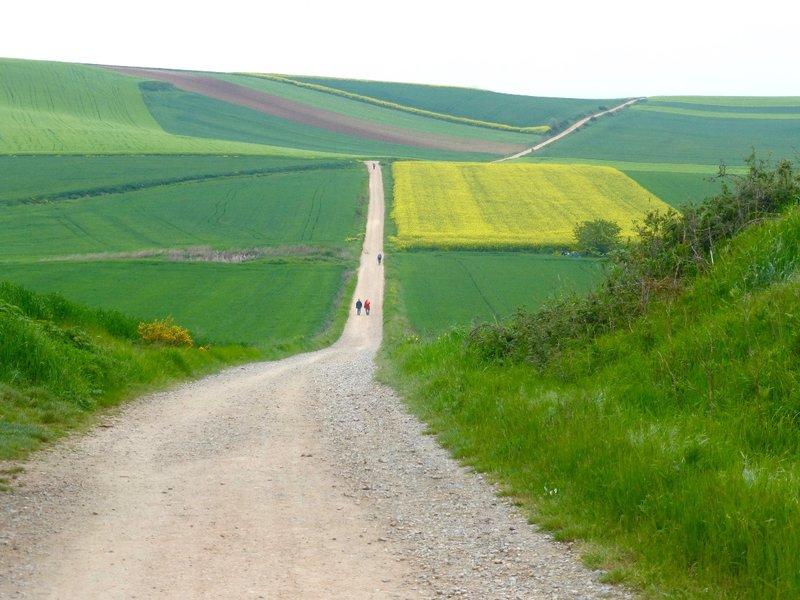 Forever Road