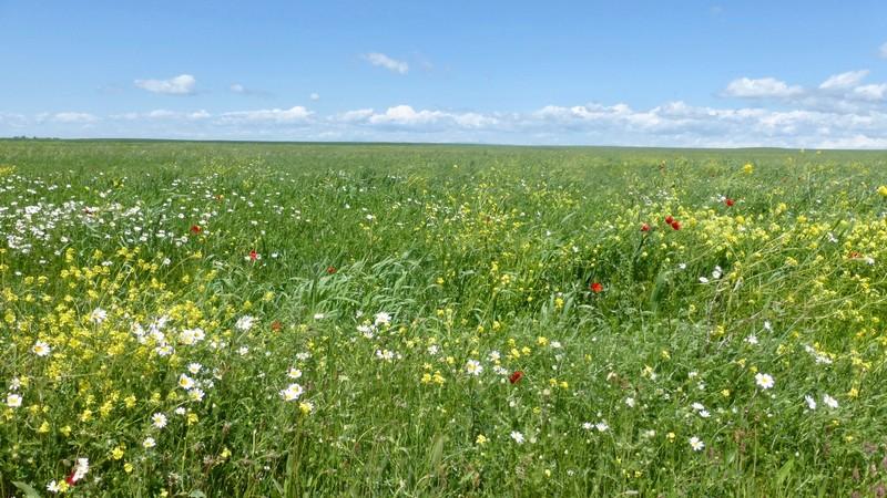 Green Grass Fields Forever