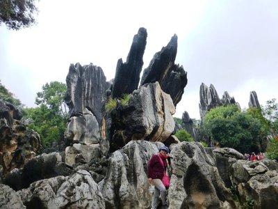 Stone Forest - jutting limestone.