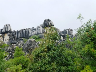 Stone Forest (5)