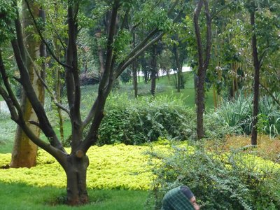 The garden before reaching Sttone Forest.