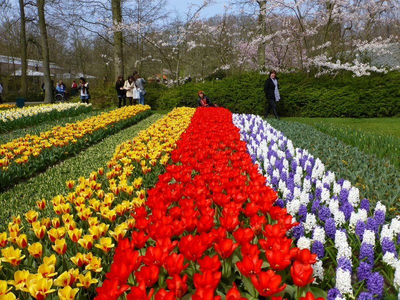 Tulip Gardens Keukenhof It 39 S Never Too Late